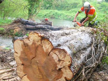 cutting up a storm damaged tree
